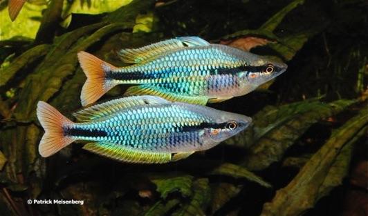 Aquarium Glaser, сентябрь Imponier%201%20Kopie1